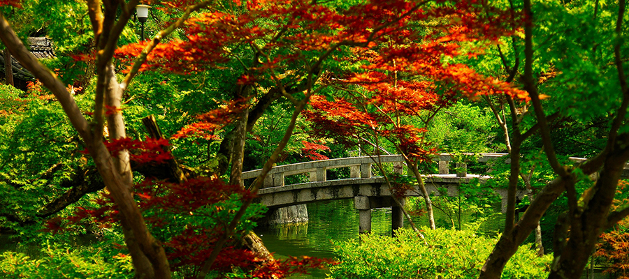 flora and bridge in Japanese garden