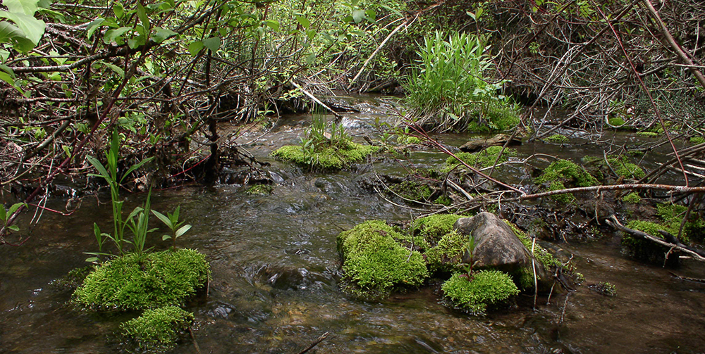 closeup of stream and foliage
