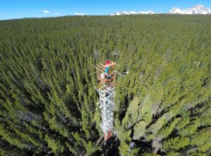 aerial view of instrument tower above evergreen trees