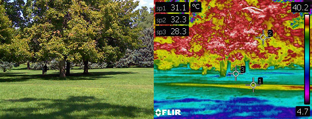 left image of trees and grass, right is a thermal image of the same scene.